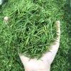 艾达福 安吉白茶凤形 春茶 2020年新绿茶 散装500g 蕙兰香 批发